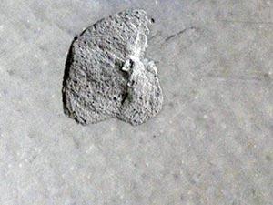 Surface Damage to Concrete Warehouse Floor